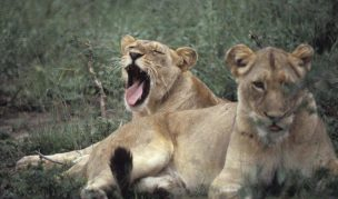 Akegera Wildlife Safari