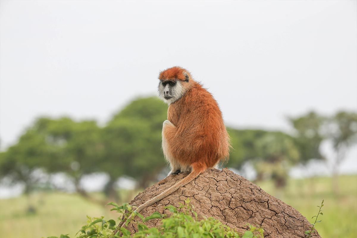 Classic Primates and Wildlife Safari