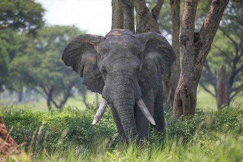 Uganda Safari Highlights