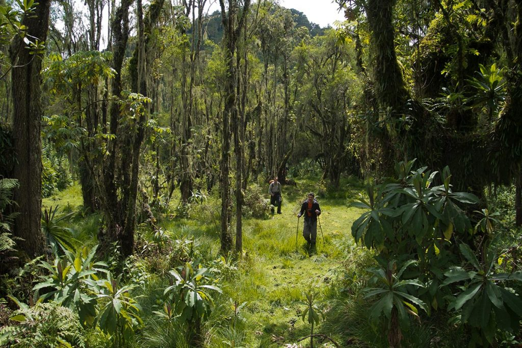 Rwenzori Mountains Vegetations