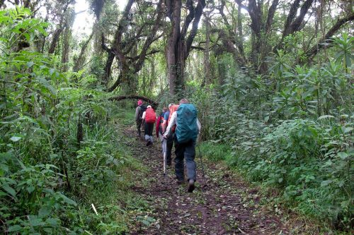 Rwenzori Mountains, Mahoma Trail Hike