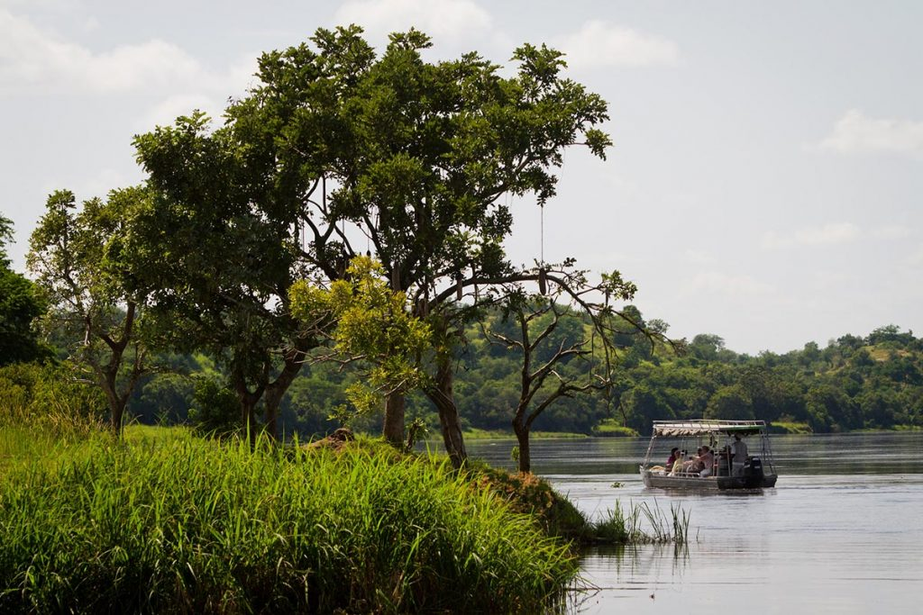 Experience the Kazinga Channel & Victoria Nile Shores Wildlife drama on a boat safari