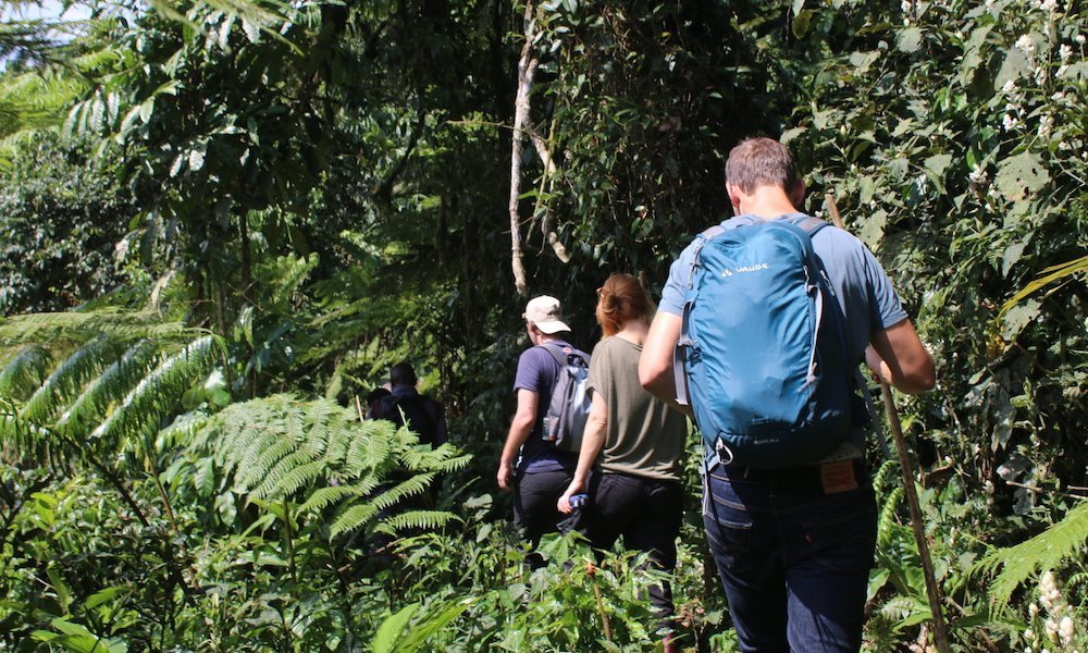 Hiking through Bwindi Jungle