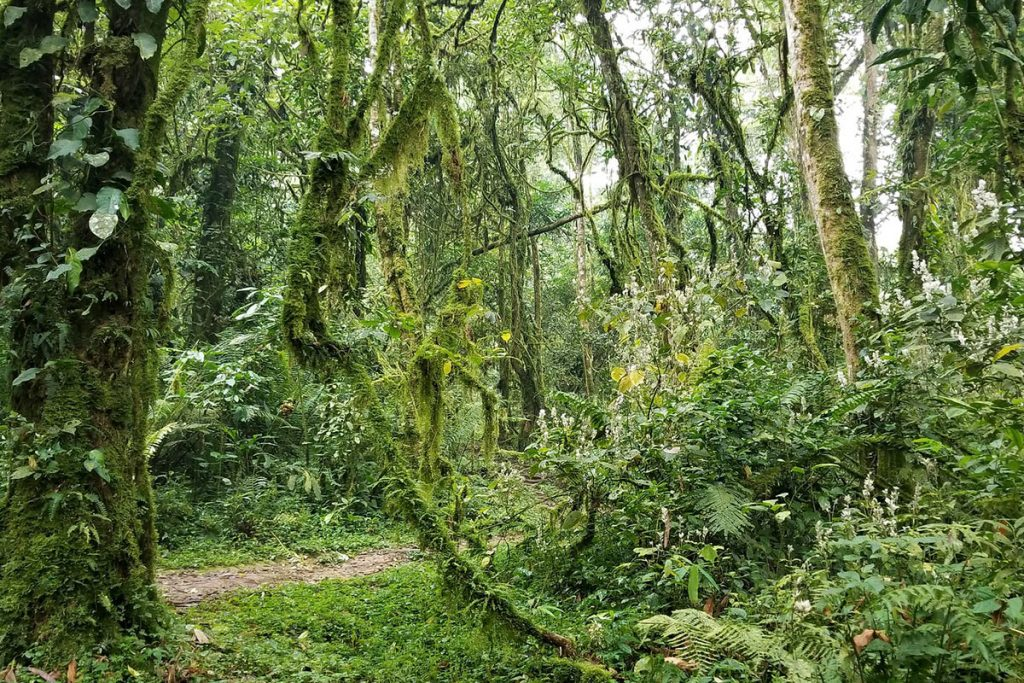Bwindi Forest vegetation