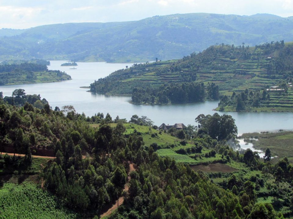 Discover Uganda's Flora and Fauna and vegetation