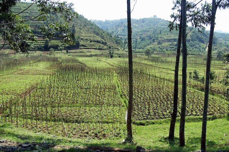 Typical Rwanda Landscape, Rwanda facts