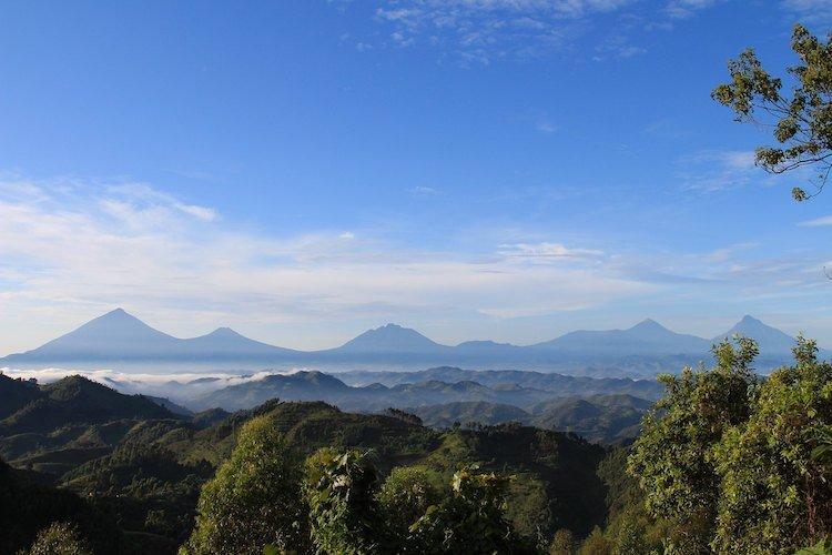 Virunga Vulkane, Nkuringo, Uganda