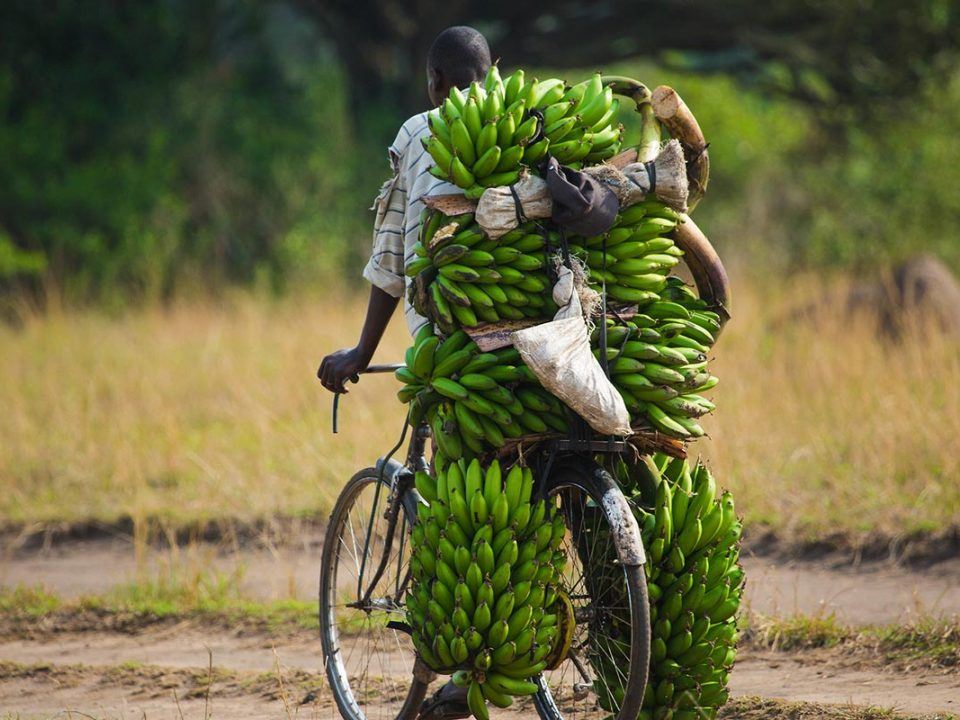 Is it Safe to Travel to Uganda in 2020-21