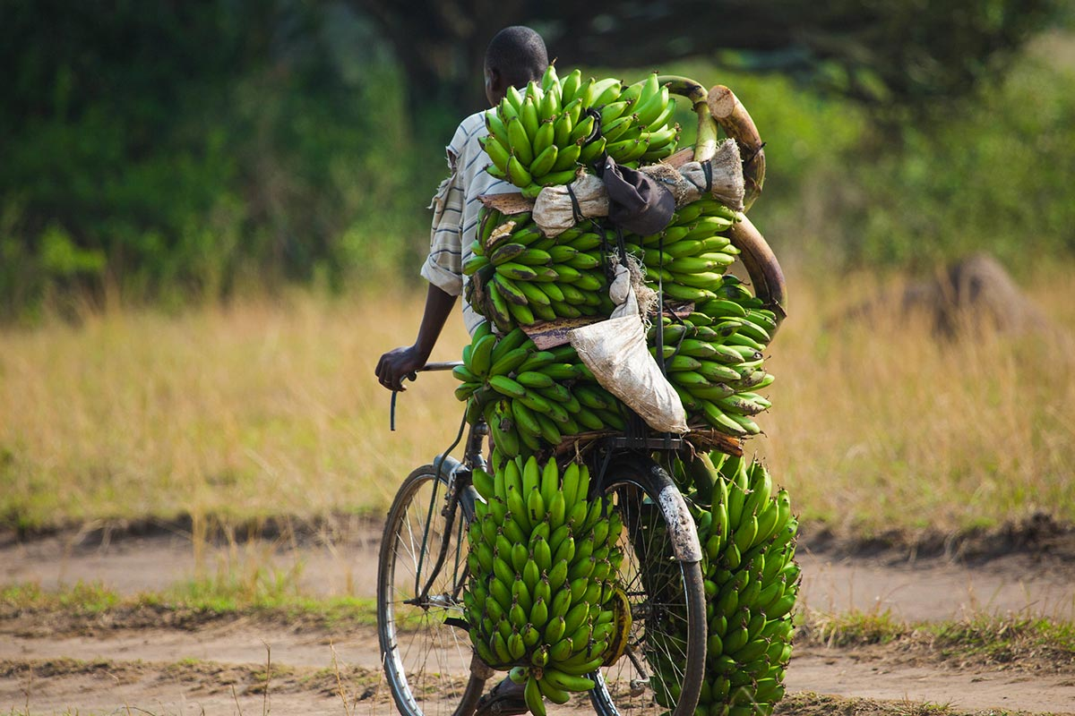 Is it Safe to Travel to Uganda in 25   Uganda Safety   Nkuringo