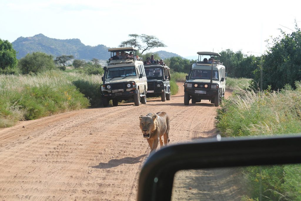 Africa Safari, Scheduled group tour, Uganda Safari Adventure