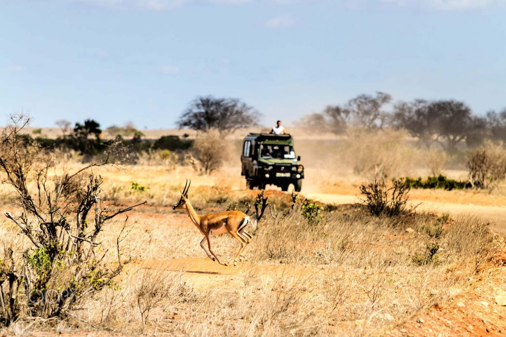 African Savannah Game Drives