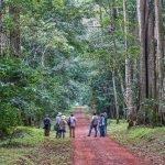 Uganda Birders Paradise (Birding Safari)
