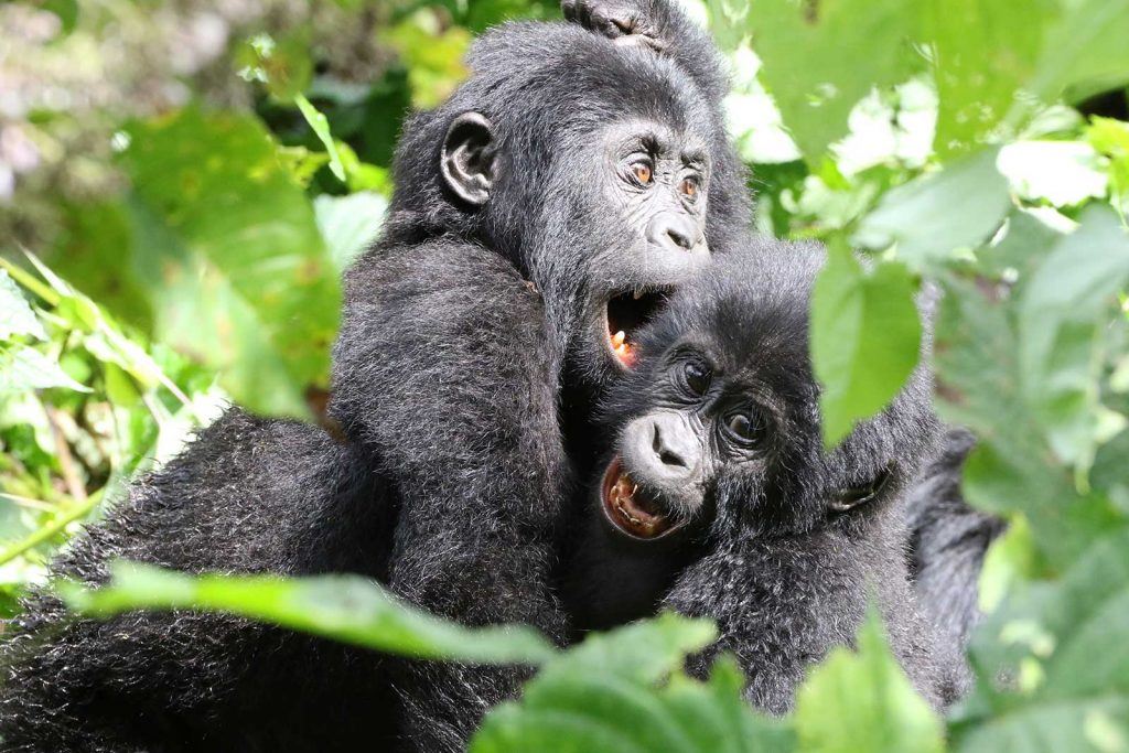 Gorilla Trekking Adventure – Fly-in Safari