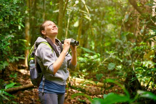 Gorilla Adventure Safari