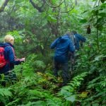 Gorilla Safari & Visoke Hike