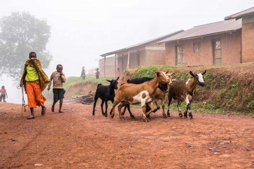 Community Walks around Bwindi Impenetrable National Park