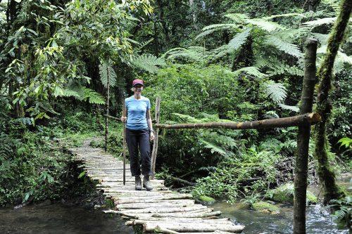 Hiking and Nature Walks in Bwindi