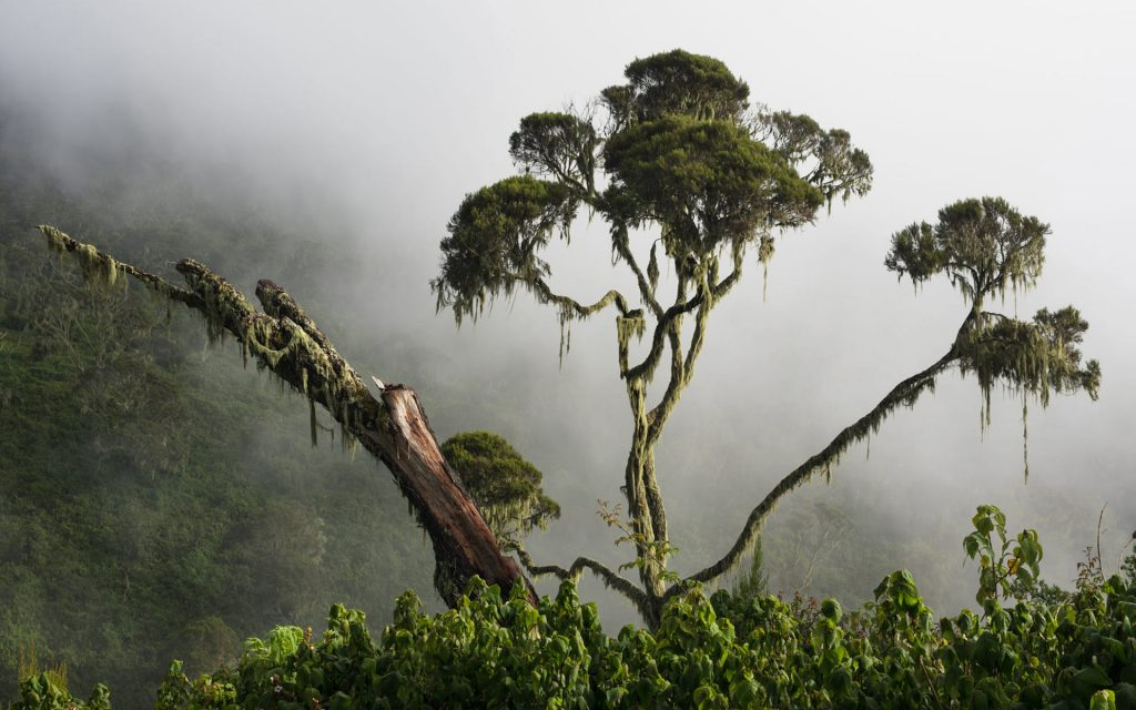 The Misty Dump Bwindi Forest. Best time for a trip to Uganda
