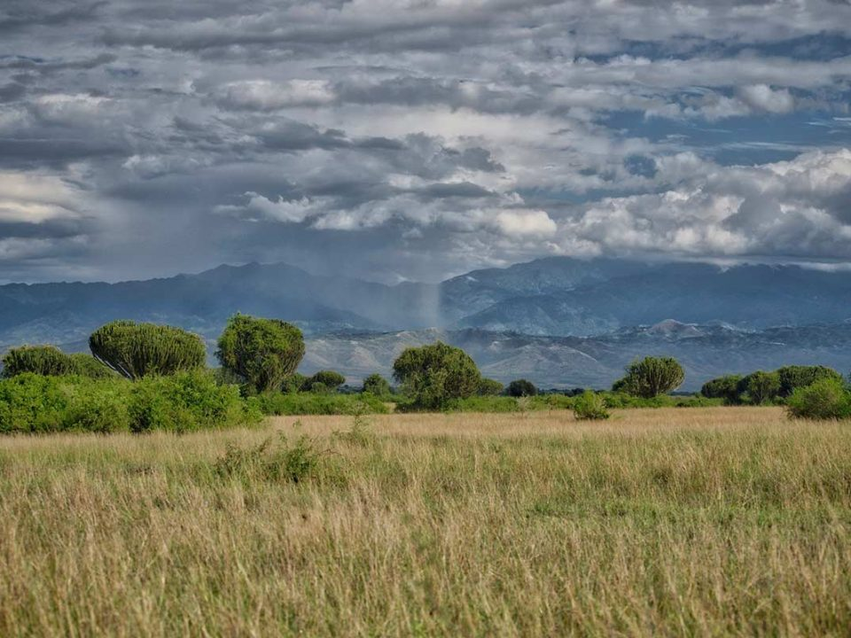 Best time for a safari trip to Uganda
