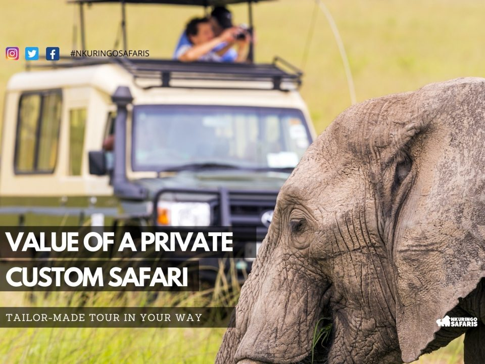 Value of a Private, Custom Safari. Tailor-made Tours