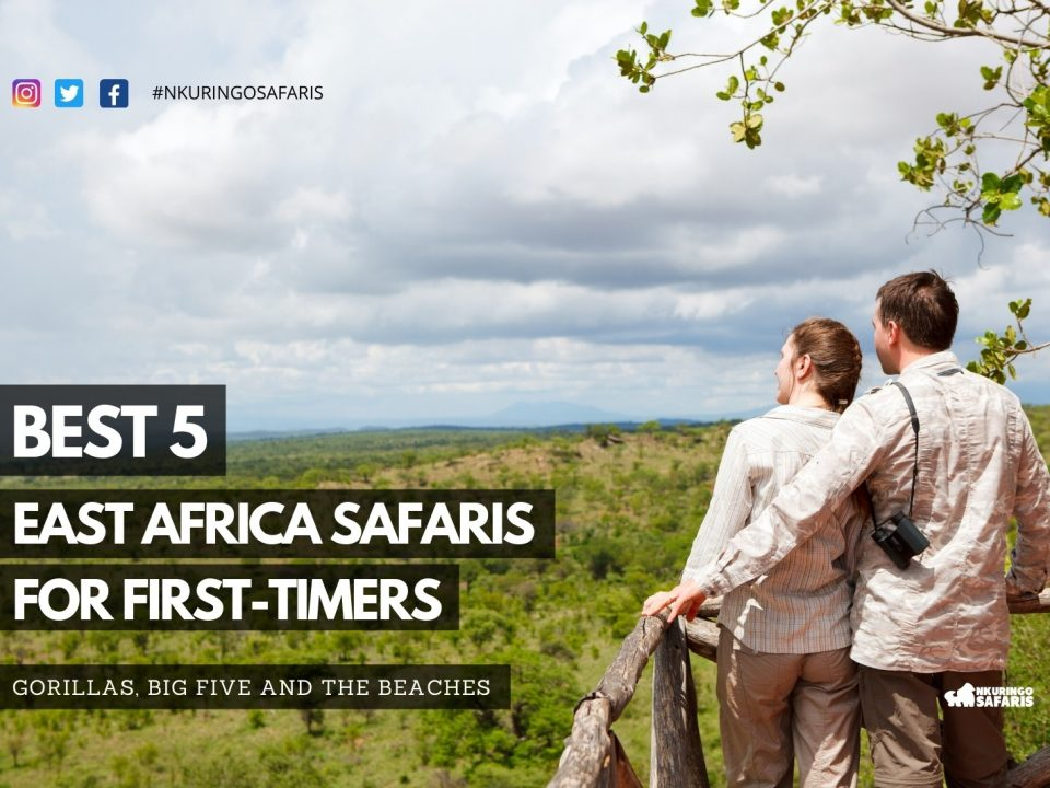 Best 5 east Africa safaris for first-timers