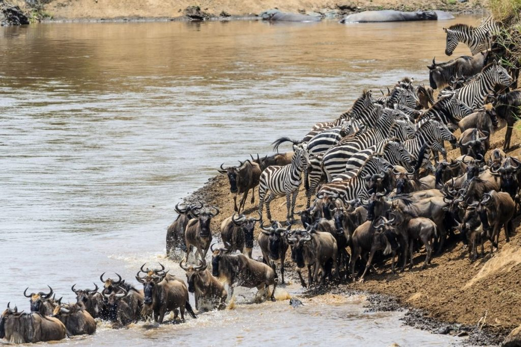 Kenya - Tanzania Migration for first timers