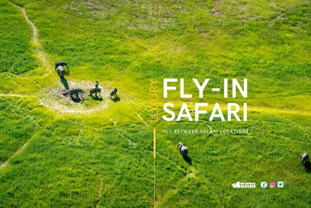Fly-in safari tours in East Africa