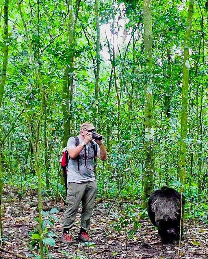 Best time for chimps tracking in Uganda