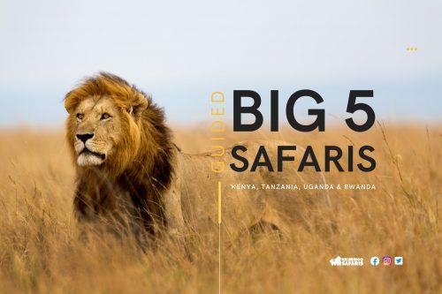 Big 5 safari in east africa