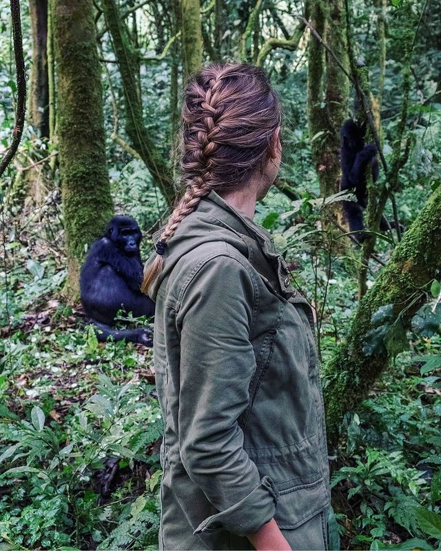 close Encounter with mountain gorillas - best time to go - A Restorative Safari Vacation in Southwestern Uganda — for Sustainable Travelers