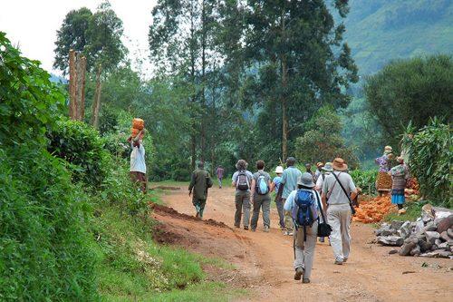 Nkuringo Walking Safaris - Uganda Local Safari Guides
