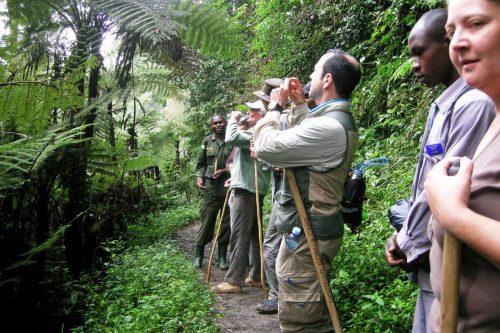Nature hiking Experience in Bwindi