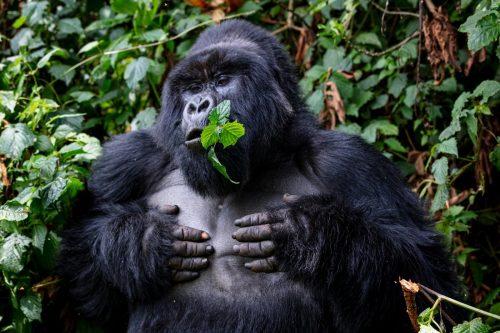 Best of Uganda Safari