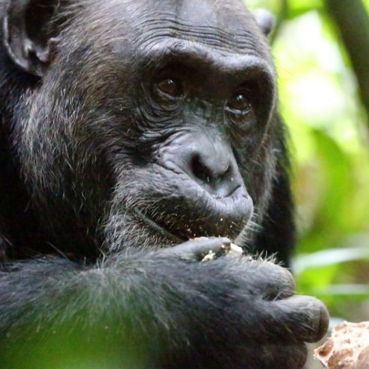 Kibale Forest National Park for primate viewing experiences