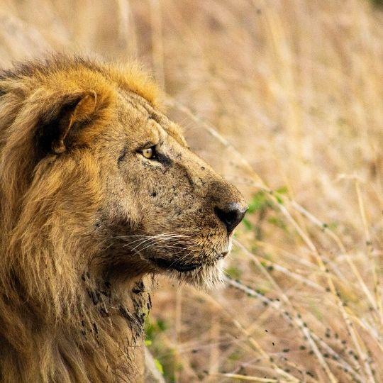 Kidepo Valley National Park, Uganda's undiscovered big game safari park