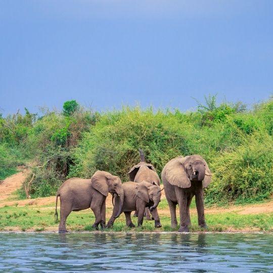 Queen Elizabeth National Park, for Uganda safari family holidays